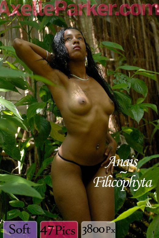 Anais - `Filicophyta` - for AXELLE PARKER