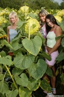 Sandy M & Josje B & Anne B in 3 naked girls in a sunflower field gallery from CLUBSEVENTEEN