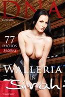 Walleria - Sirah