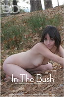In The Bush