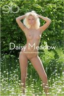 Liza I - Daisy Meadow