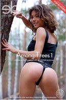 Divina A - Among Trees 1