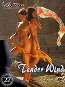 Tender Wind