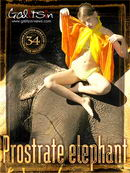 Prostrate Elephant