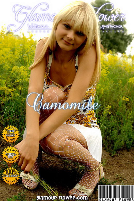 `Camomile` - for GLAMOURFLOWER ARCHIVES
