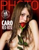 Caro - Red Rose
