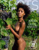 Joyce - Grape Harvest