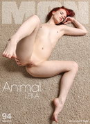 Leila - Animal