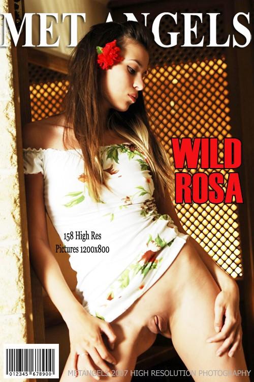 Rosa - `Wild Rosa` - for METANGELS