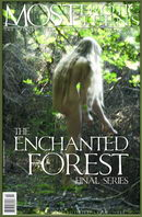 The Enchanted Forest 02