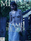 Tame The Tiger 03