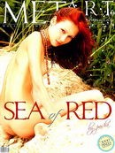 Sea Of Red 02