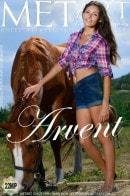 Rosella - Arvent