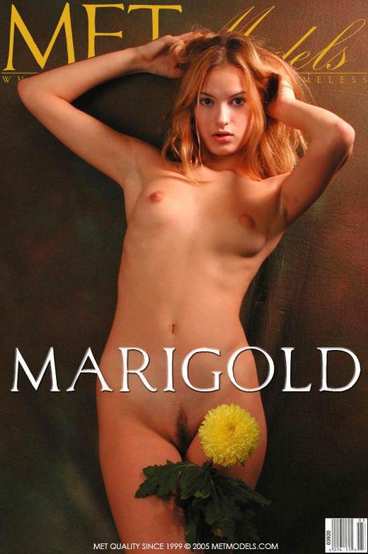 Marigold gallery from METMODELS
