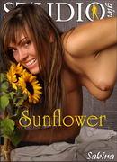 Sabina - Sunflower