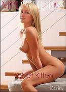 Velvet Kitten