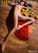 Gypsy Harvest