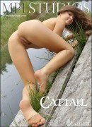 Zsanett - Cattail