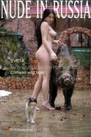 Crimean Wild Boar
