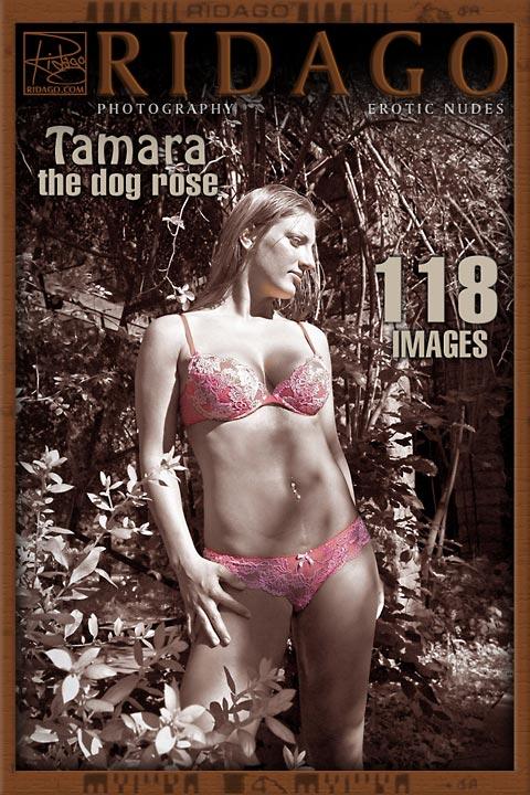 Tamara - `Dog Roses` - by Carlos Ridago for RIDAGO