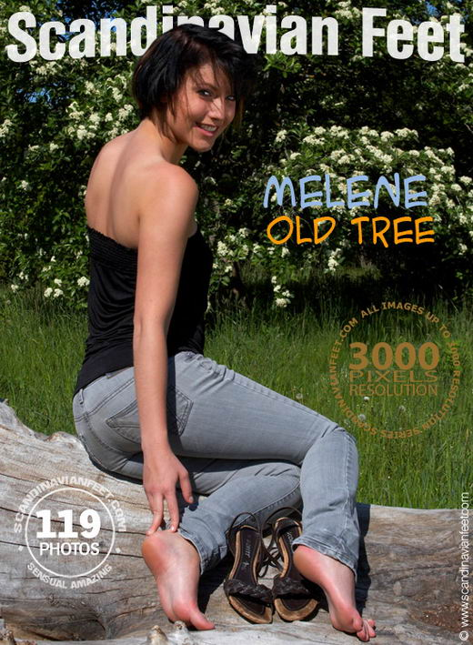 Melene - `Old Tree` - for SCANDINAVIANFEET