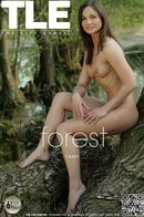 Casey - Forest