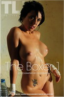 The Boxer 1