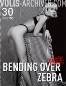 Bending Over Zebra
