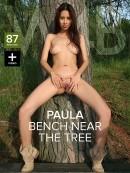 Paula Shy - Tree Bench